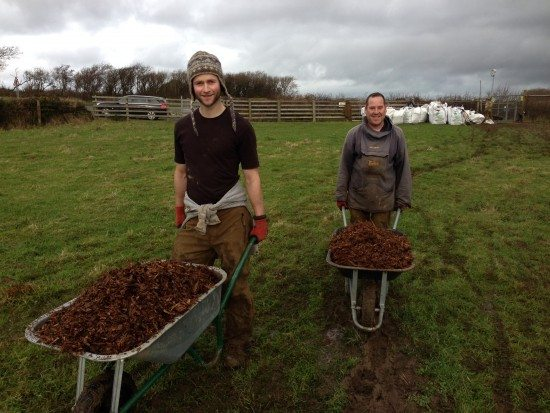 native hedgerow planting, tree planting,