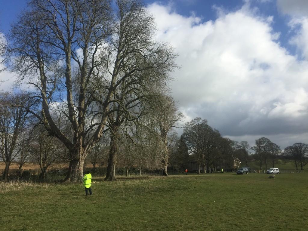 Tree inspection, Kingston Maurward avenue, Dorchester
