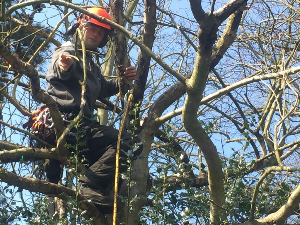 removing dead branches