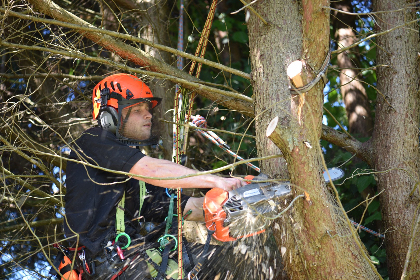 emergency tree work, tree care, Weymouth tree care. tree care Weymouth, Coastal Tree Care