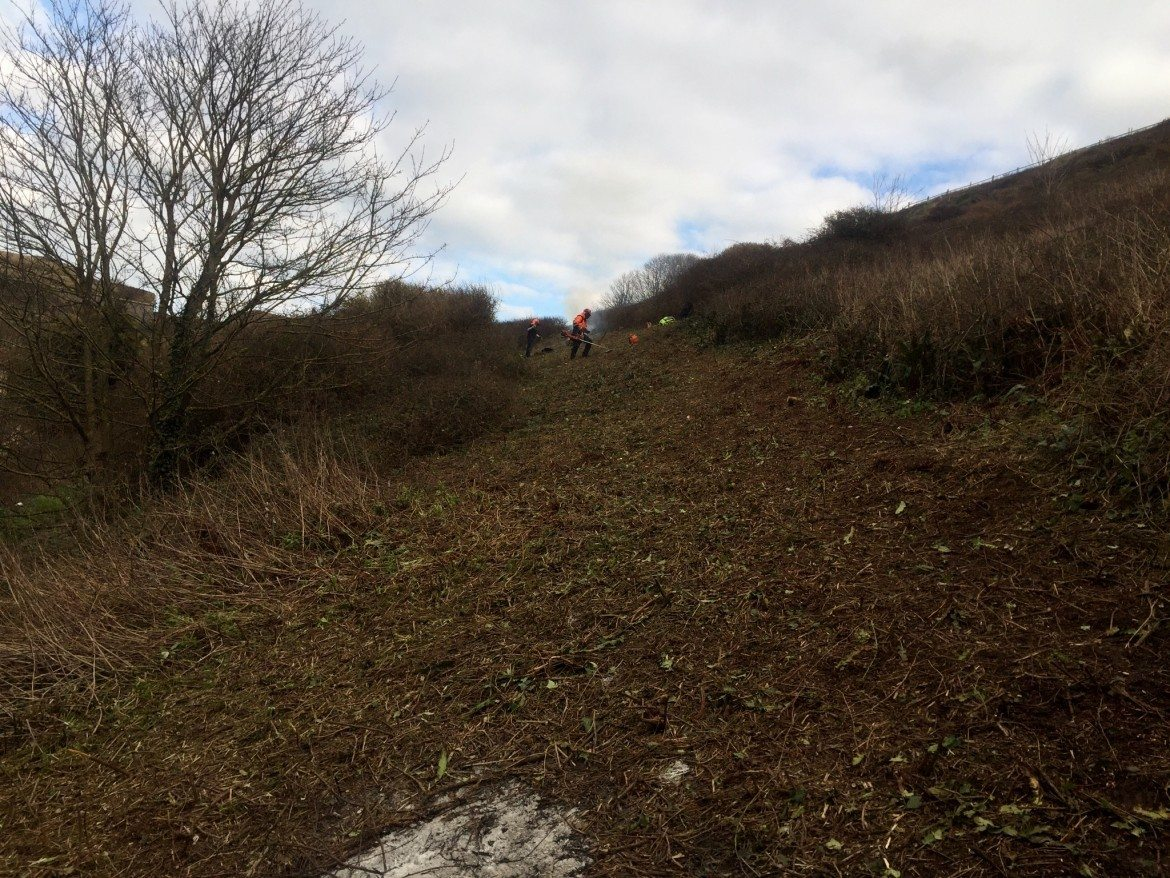 Clearing Fence Lines