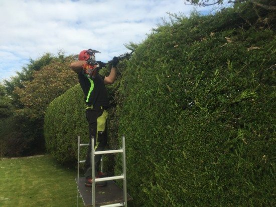 hedge trimming from platform