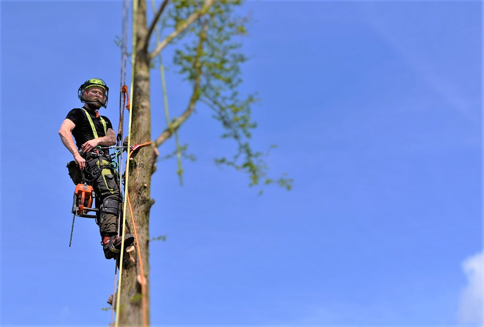 Tree surgery in Weymouth, Weymouth tree surgery, Weymouth tree surgeons, tree felling, dawn redwood