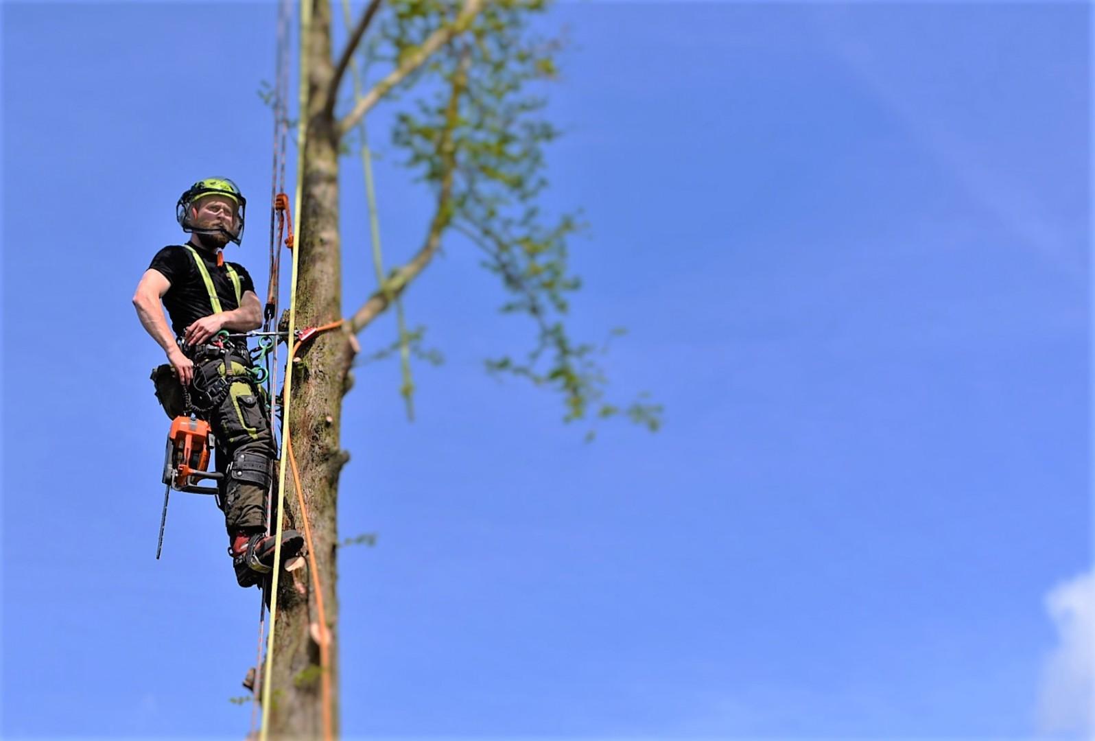 Tree surgery in Weymouth, Weymouth tree surgery, Weymouth tree surgeons, tree felling, dawn redwood