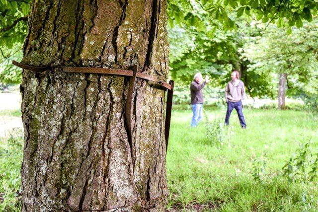 Ancient Tree Forum, ATF, ancient trees, veteran trees