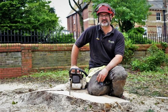 Weymouth tree surgeon, Weymouth tree surgeons, tree surgeon Weymouth, tree surgeon Dorchester, tree surgeon Portland, about us, tree felling in Weymouth. tree, felling, tree felling, Weymouth, cypress
