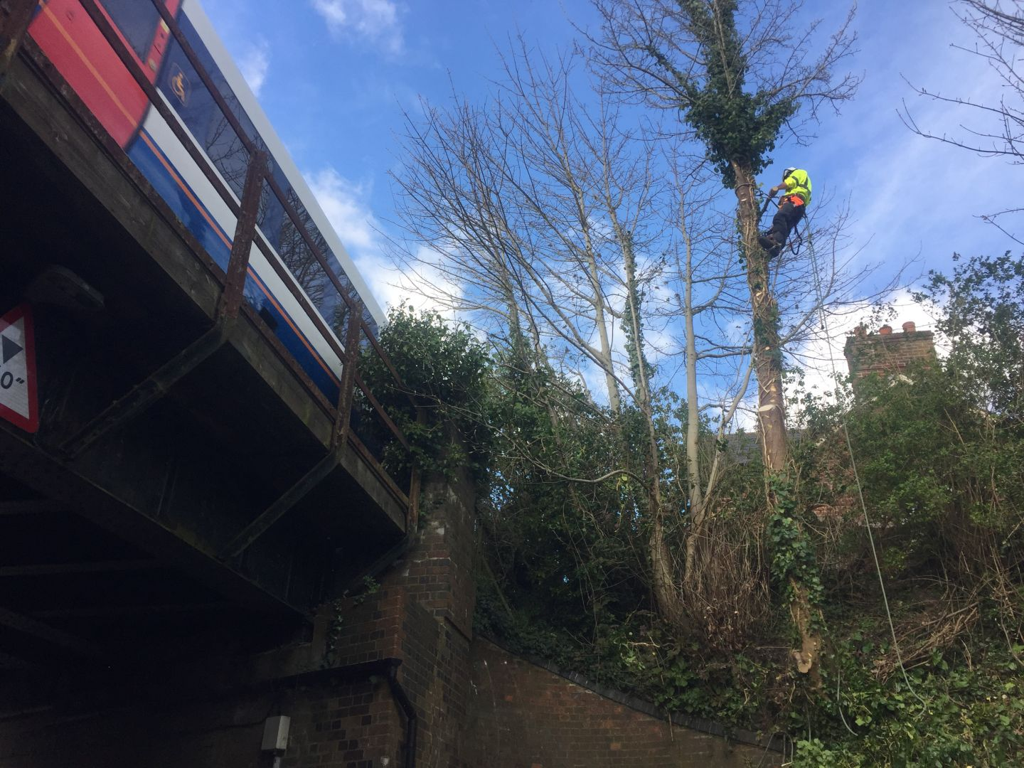 tree felling, dismantling, Dorchester, tree coppicing in Dorchester, embankment, train, railway line