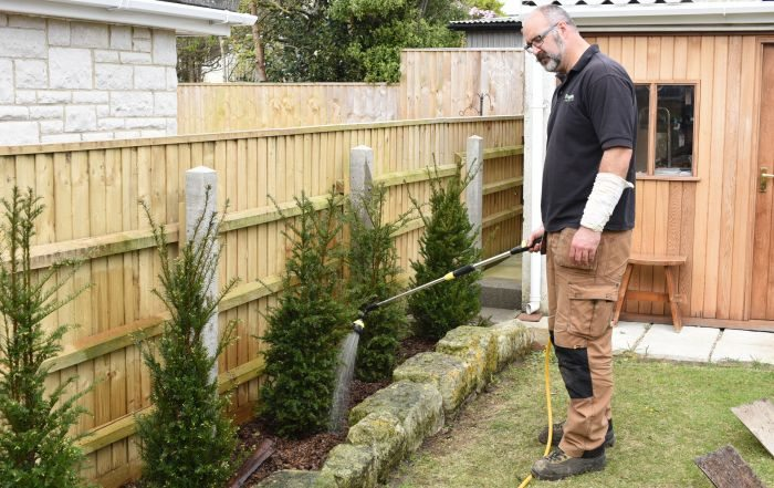 planting a yew hedge, yew, hedge, planting,