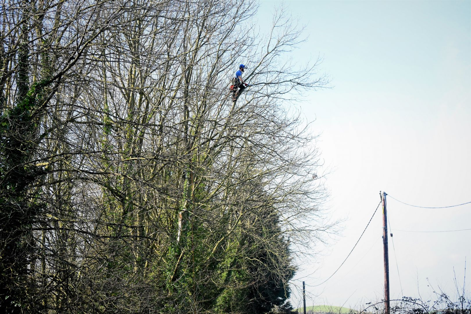 Weymouth tree surgery, Weymouth tree surgeons, tree surgeons Weymouth, storm damage, clearing storm damage, arborist, climbing arborist, emergency tree work, tree safety work, wood chipper, recycling, waste recycling