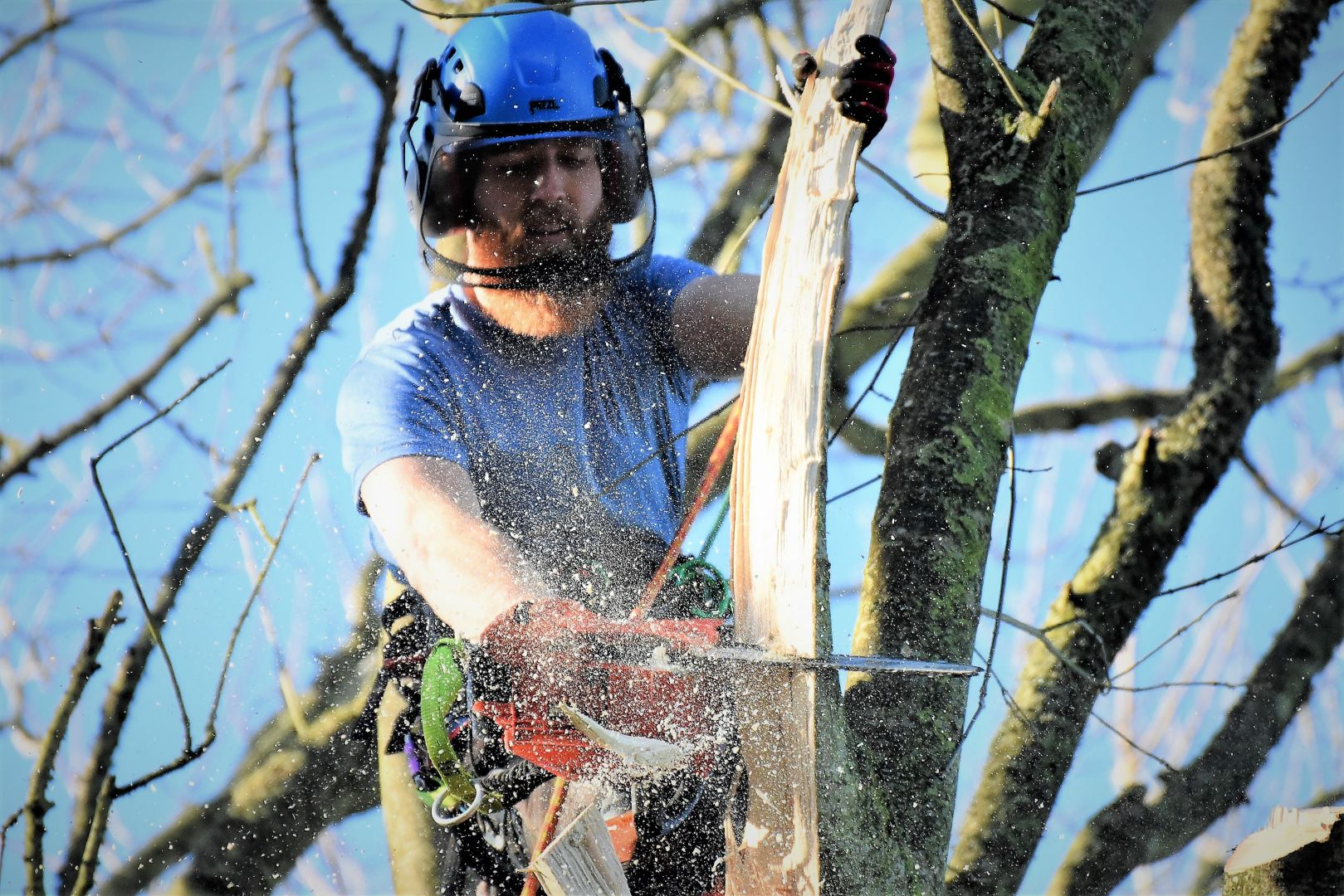 emergency tree work, Weymouth tree surgery, Weymouth tree surgeons, tree surgeons Weymouth, storm damage, clearing storm damage, arborist, climbing arborist, emergency tree work, tree safety work