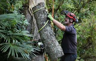 tree care, tree care Weymouth, Weymouth tree care, Abbotsbury Subtropical Gardens, emergency tree care, emergency tree work, arborist, climbing arborist, Weymouth tree surgeons, Dorchester tree surgeons, ratchet straps,