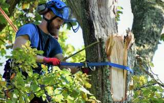 Abbotsbury Subtropical Gardens, emergency tree care, emergency tree work, arborist, climbing arborist, Weymouth tree surgeons, Dorchester tree surgeons, ratchet straps,