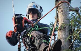 tree management, tree felling, Weymouth tree surgeon, Weymouth tree surgeons, Weymouth arborist, arborist Weymouth, arborist Dorchester, arborist Dorset, tree management plans