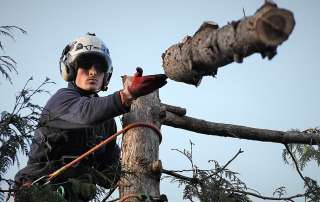 James sending a log, tree management, tree felling, Weymouth tree surgeon, Weymouth tree surgeons, Weymouth arborist, arborist Weymouth, arborist Dorchester, arborist Dorset, tree management plans